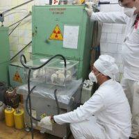 ИВГ.1М реакторында активтенген марганец диоксидінің есебінен оларды сәулелендіру дәрежесін бағалау үшін тәжірибе жүргізілетін аңдары бар контейнердің химиялық боксынан алу